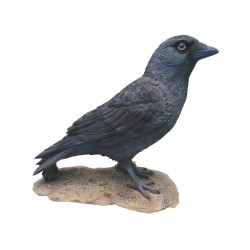 Vivid Arts Real Life Jackdaw Crow Realistic Animals Resin Ornament