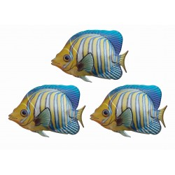 Set Of 3 Primus Regal Angelfish Colourful Metal Garden Wall Art Plaque